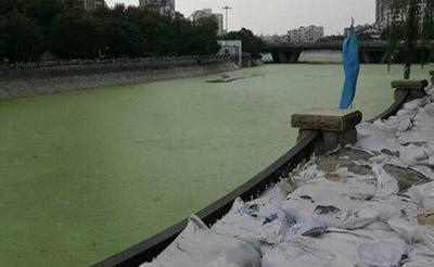 【曝光】触目惊心!南淝河怎么变得这么绿?