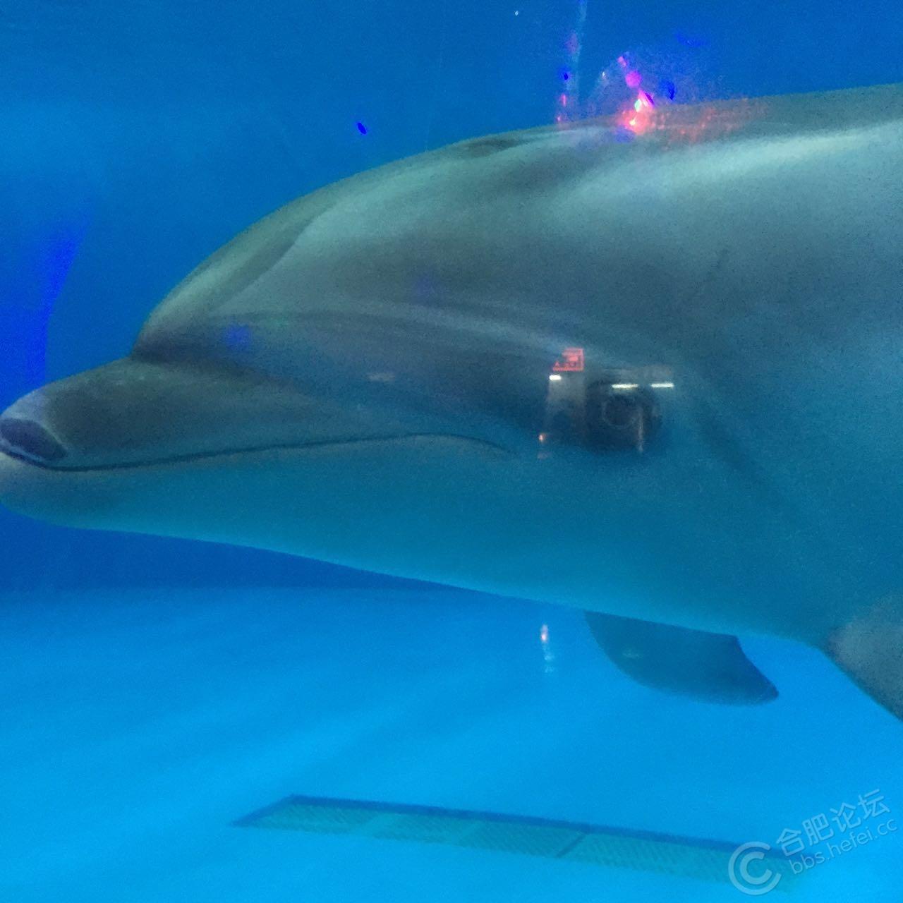 奇妙的动物世界 - 摄影天地