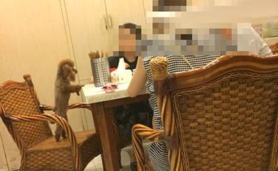 【热议】在饭店吃饭遇到狗上桌子的,你怎么看