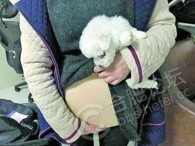 安检工作人员立即报警,女大学生见瞒不住,只好把小狗拿出来.