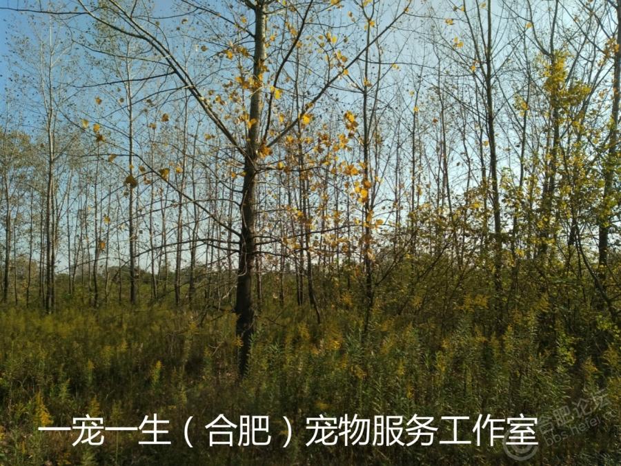 照片 091_meitu_5_meitu_7.jpg