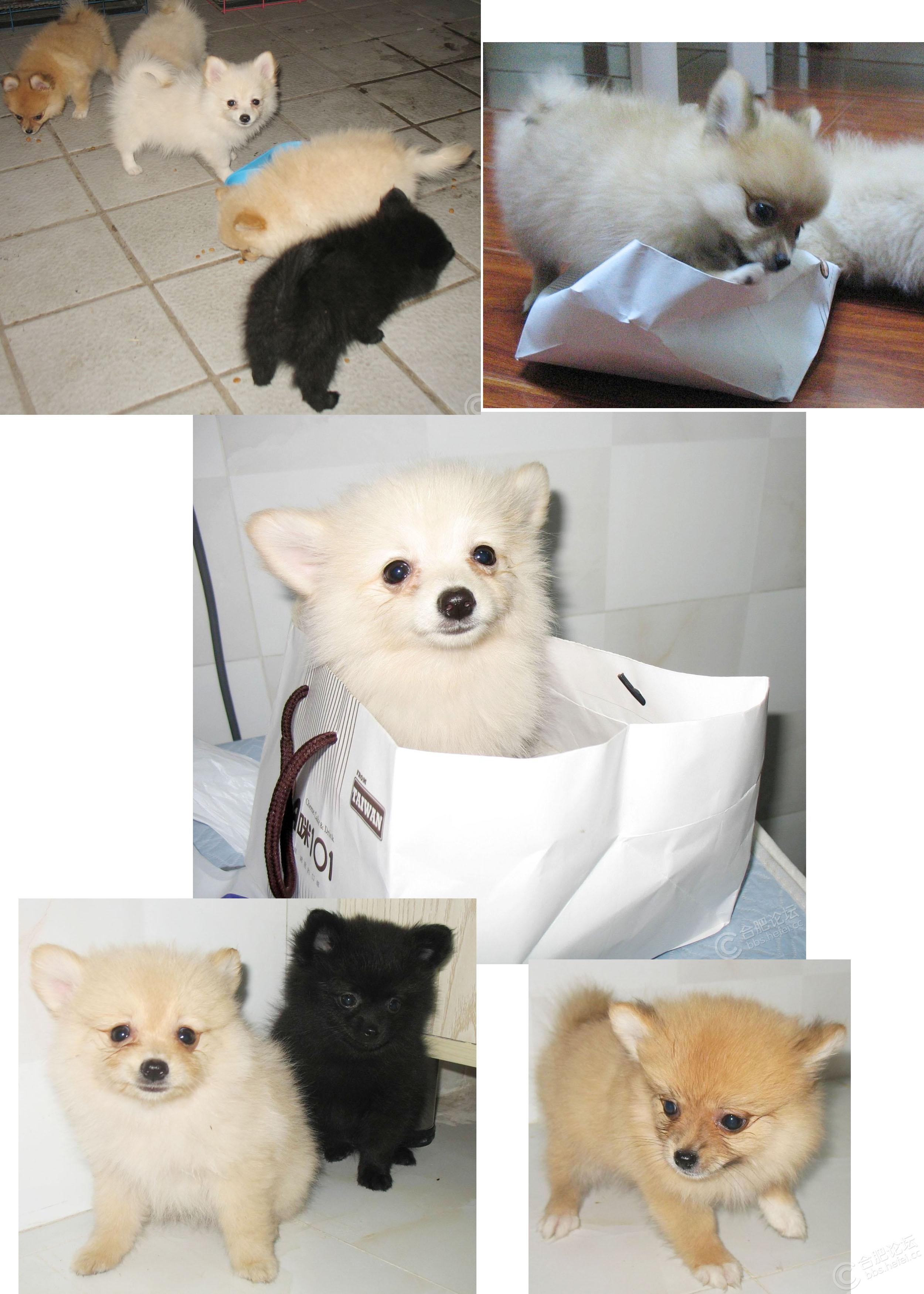 五只小萌犬