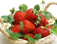"""周谷堆长丰""""红颜""""草莓上市"""