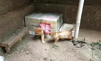 给小区的流浪猫做了窝,昨天看他们已经住进了