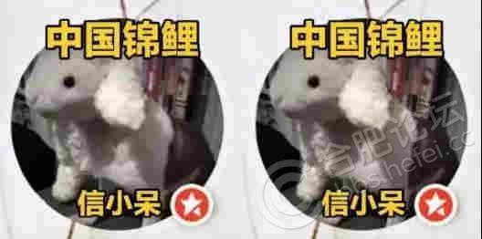 微信图片_20181016154225_副本.jpg